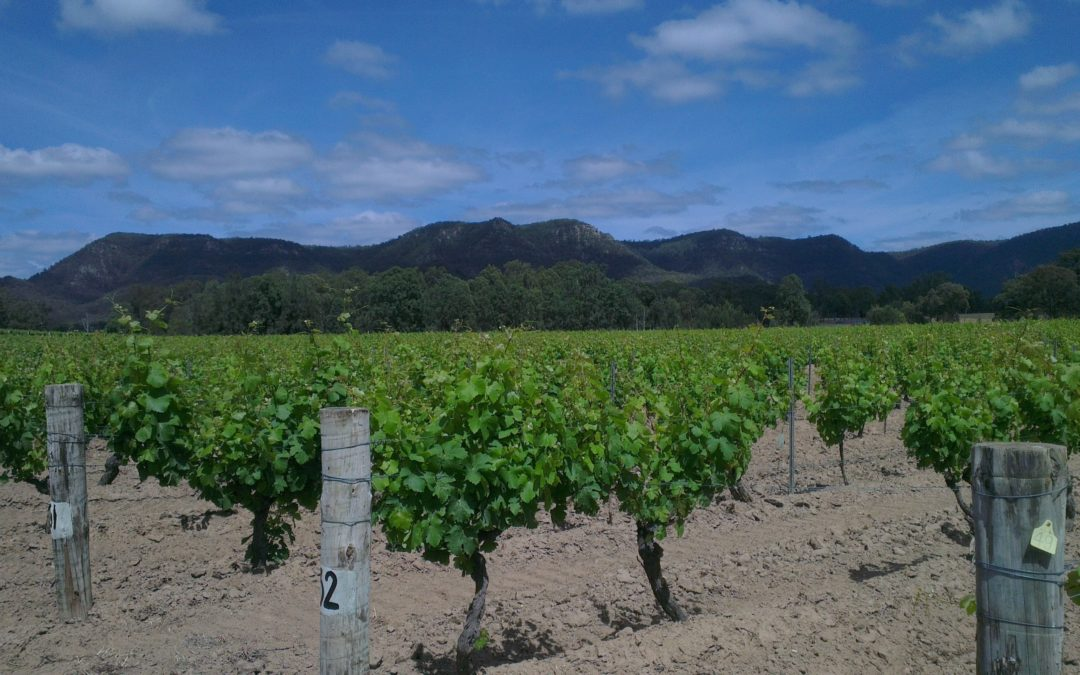 John Rozentals - Up Close to a Chunk of Fabled Hunter Valley Dirt